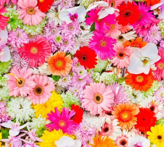 Фотообои Герберы разных цветов 4651