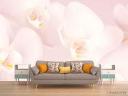 Фотообои Орхидеи распустились - 1