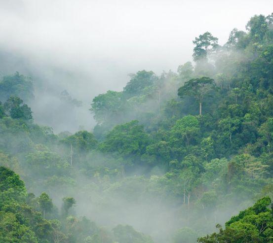 Фотообои тропический лес 20445