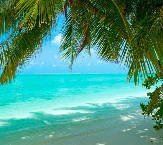 Фотообои Тень от пальмовых листьев 6327