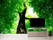 Фотообои Большое,зеленое дерево - 2