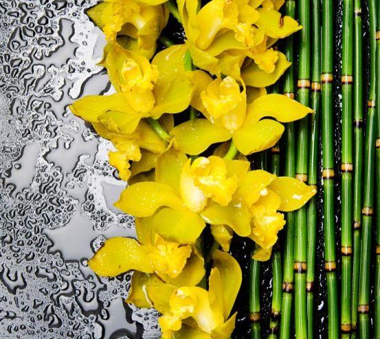Фотообои желтая орхидея с бамбуком и водой 21435