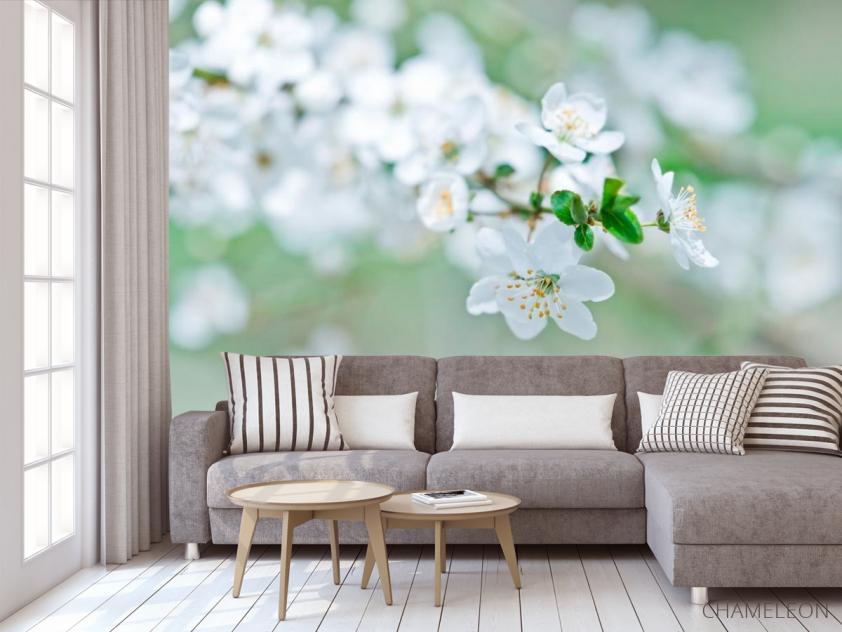 Фотообои Весной цветущий абрикос - 3
