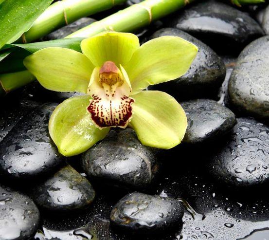 Фотообои Зеленая орхидея, камни 10233
