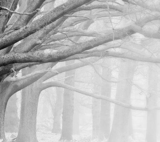Фотообои большие серые деревья 20490