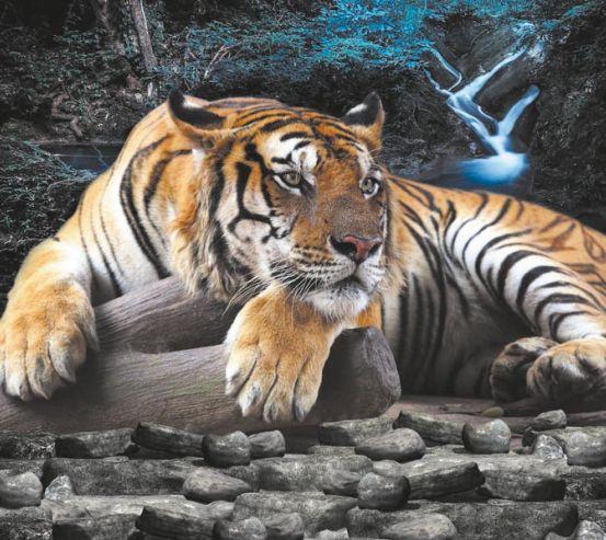 Тигри 19335