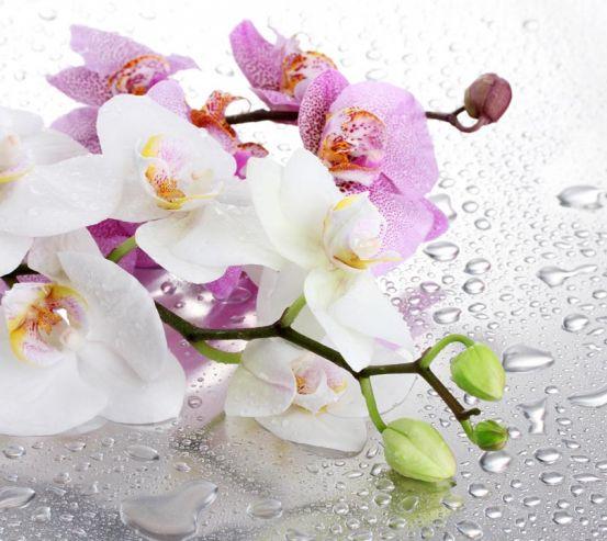 Фотообои орхидеи на фоне с каплями 20599