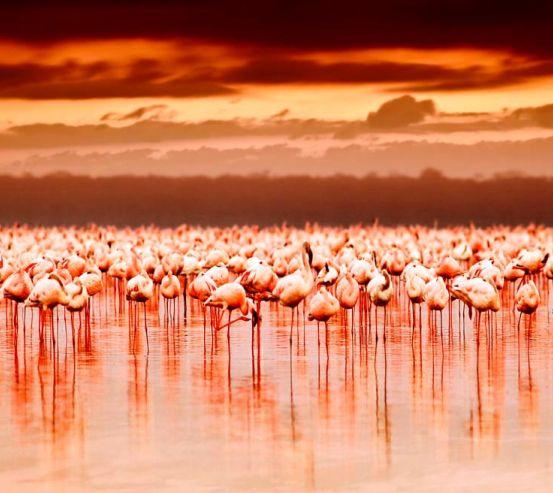 Фотообои Фламинго 8952