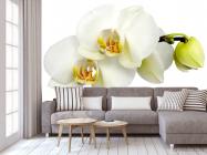 Фотообои Орхидеи желто-белые - 3