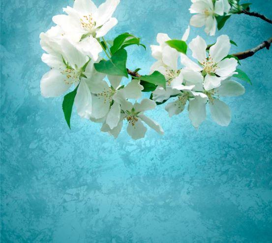 Фотообои Цветы абрикоса мелкие 5068