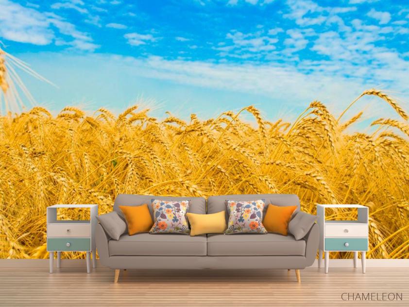 Фотообои Пшеница - 1