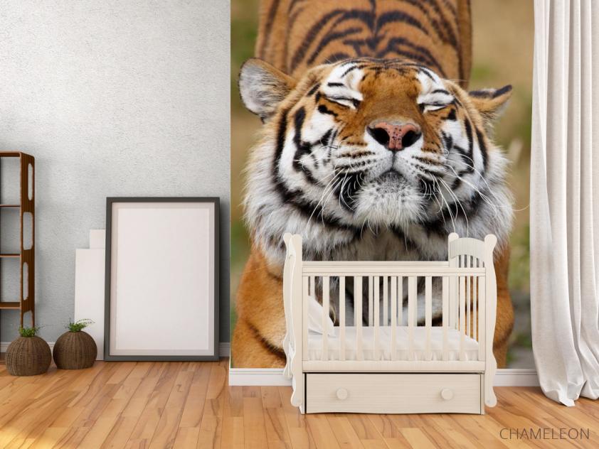 Фотообои тигр потягивается - 2