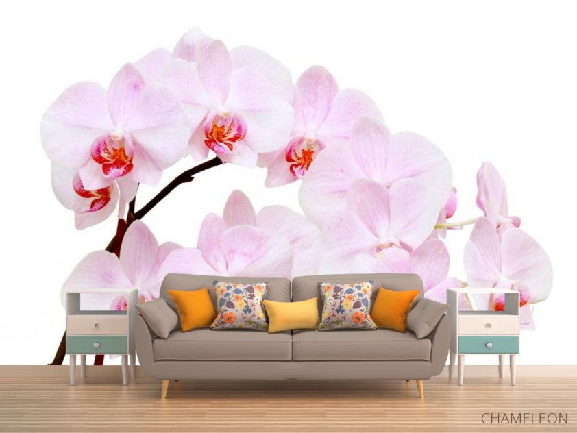 Фотообои Белоснежные цветы орхидеи - 1