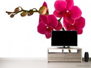 Фотообои Ветка бардовых орхидей - 2