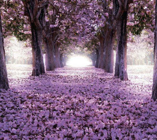 Фотообои Цветущие деревья 19815