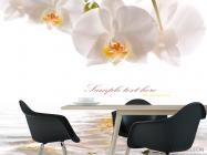 Фотообои Орхидеи белоснежные - 1