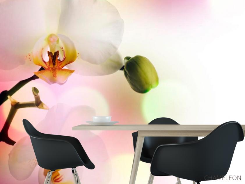 Фотообои Орхидеи цветут - 1