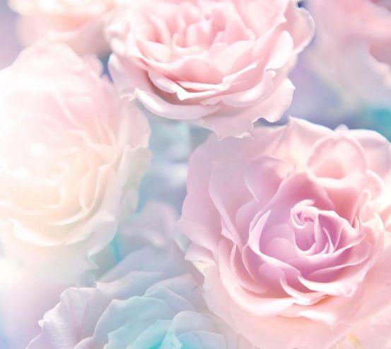 Фотообои Розы цвета сирени 9909
