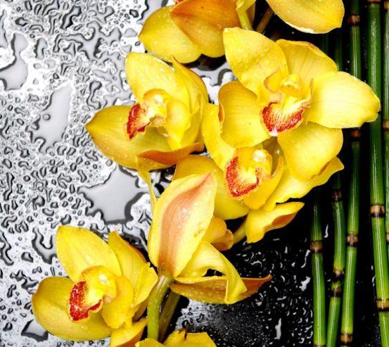 Фотообои Орхидеи желтые 4502