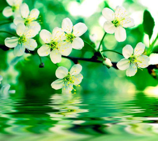 Фотообои Цветущие абрикосы 1405