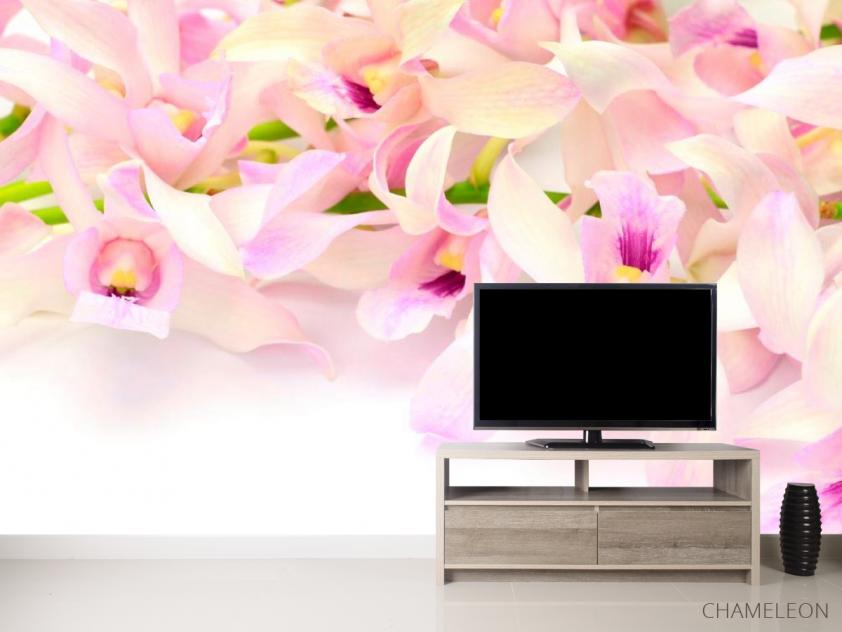 Фотообои Нежно-розовые орхидеи - 2