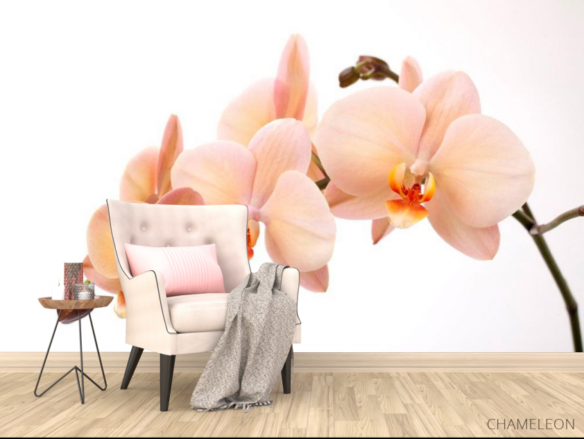 Фотообои Веточка орхидей - 4