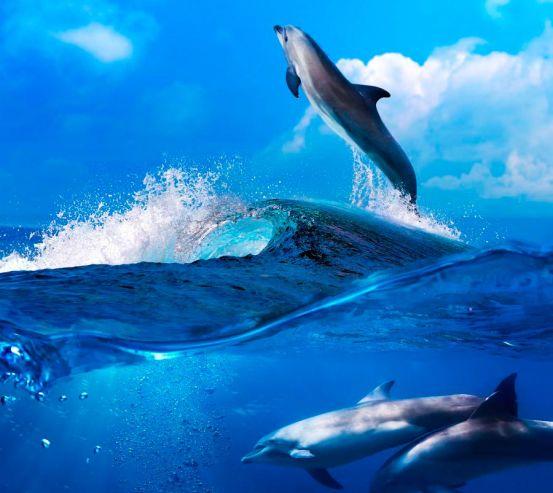 Фотообои Дельфины на волнах 9808