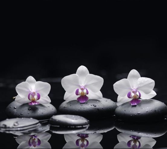 Фотообои белые орхидеи на черном фоне 20570