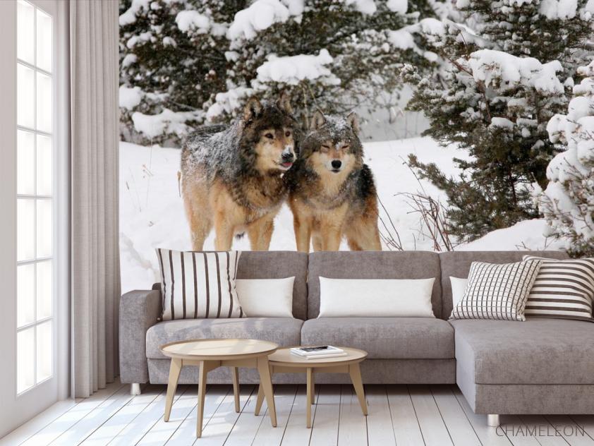 Фотообои Волки в снегу - 3