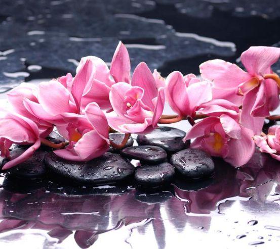 Фотообои Сиреневые цветы и камни 6537
