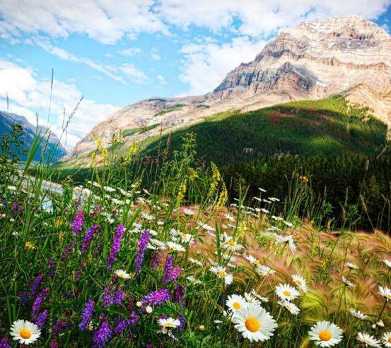 Фотообои Гора, небо, ромашки 10903