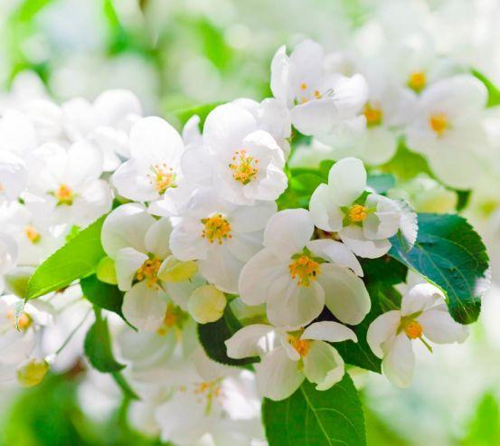 Фотообои Абрикосовые маленькие цветы 4780