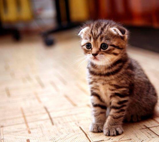 Фотообои Грустный котенок 4809