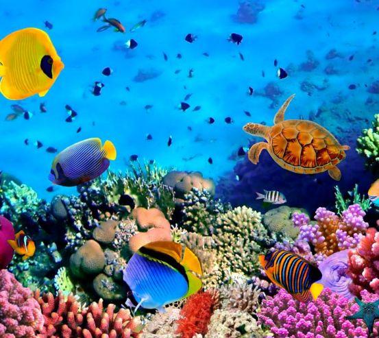 Фотообои Разнообрзие рыб 8023