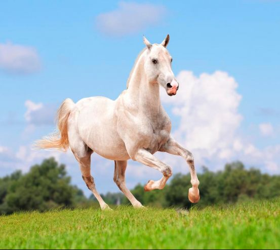Фотообои Бегущий конь 8791