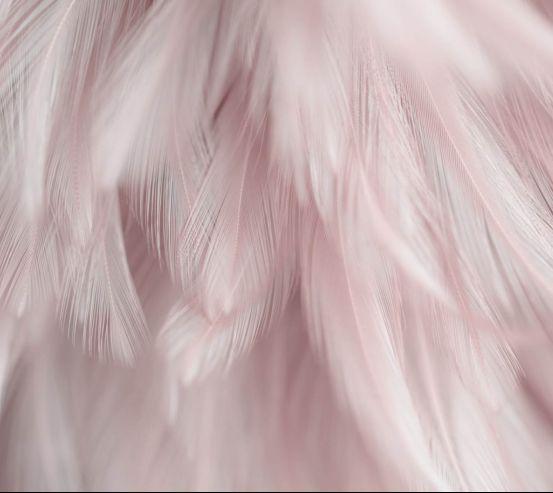 Фотошпалери Пір'я рожеві 27700