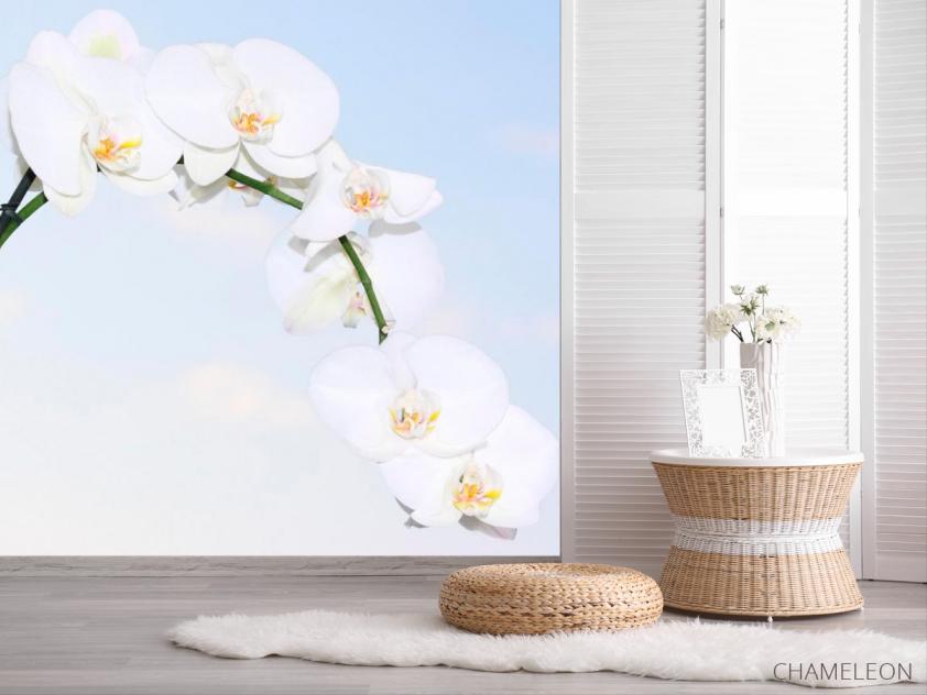 Фотообои Ветка белоснежных орхидей - 2