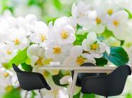 Фотообои Абрикосовые маленькие цветы - 1