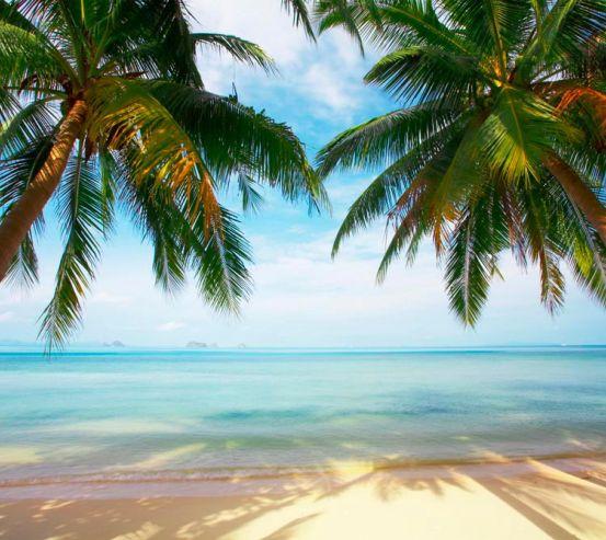 Фотообои Две пальмы, пляж 2569
