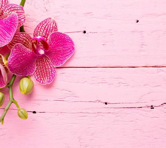 Фотообои Розовая орхидея 16843