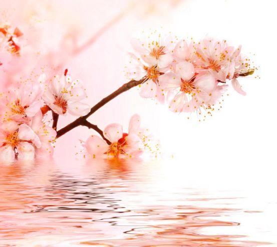 Фотообои Побеги вишни в воде 8660