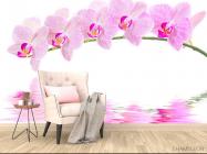 Фотообои Отражение орхидей - 4