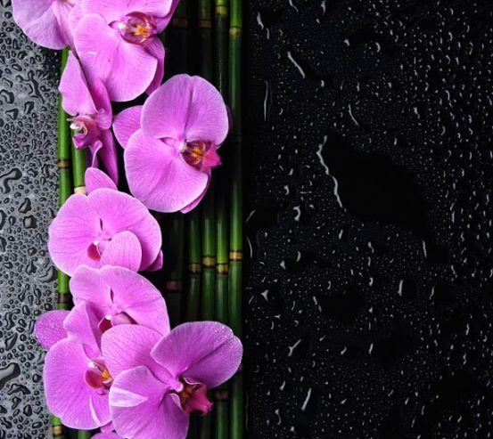 Фотообои Орхидеи розовые, бамбук 8329