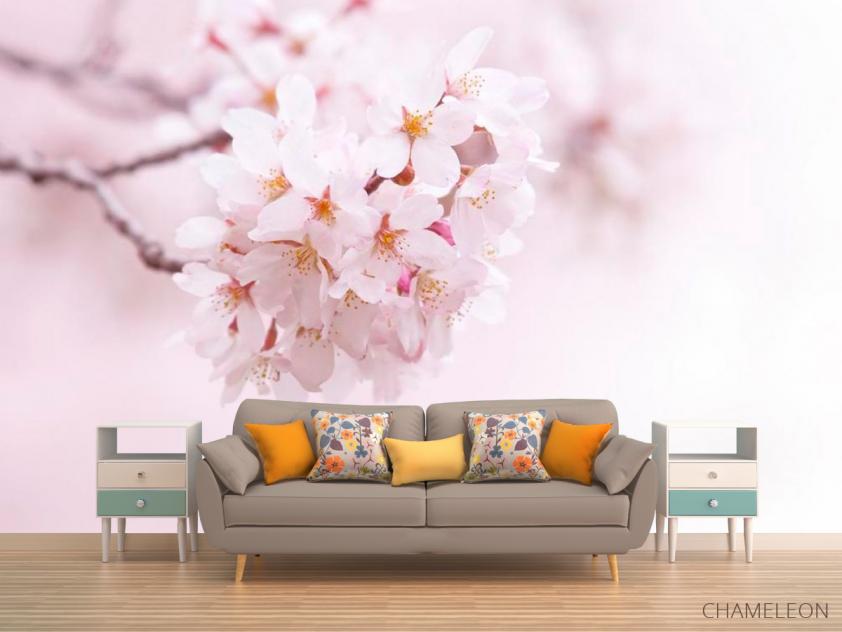 Фотообои Цветущий весной абрикос - 1