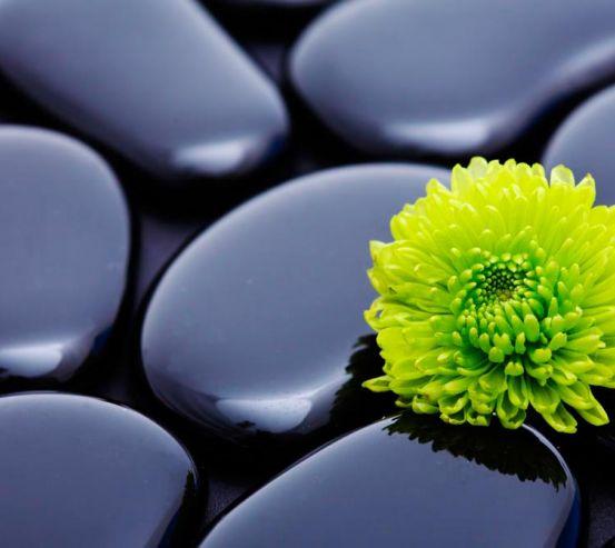 Фотообои Цветок и камни 3077