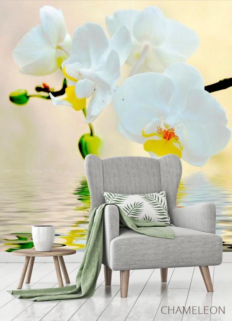 Фотообои Белоснежные орхидеи в воде - 3