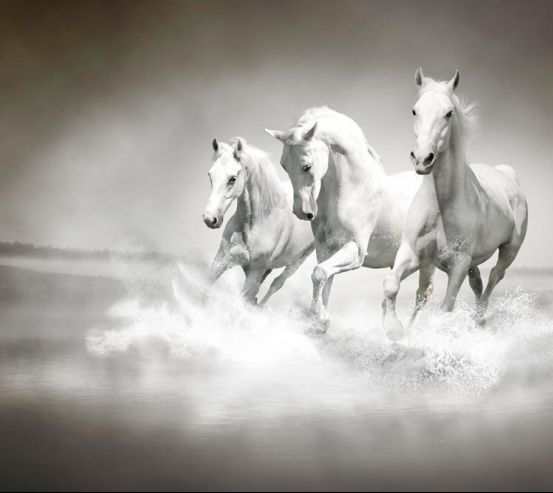Фотообои Белые кони 12094