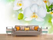 Фотообои Орхидеи в цвету - 1