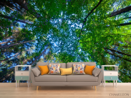 Фотообои деревья для потолка - 1