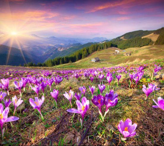 Фотообои весна, горы 25206